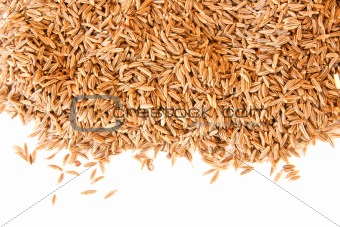 Caraway (cumin) seeds scattered on white