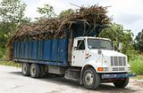 Hauling Sugarcane