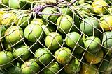 Green Citrus