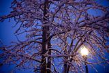 lamp post glow