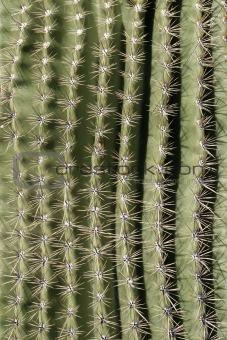 Cactus Spine Pattern