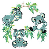 cartoon koala bears