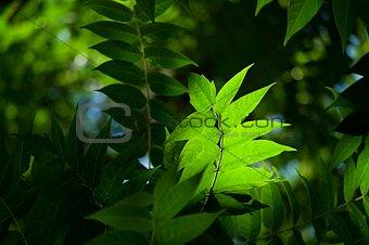 green leaves macro