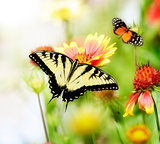 Butterflies On The Flowers