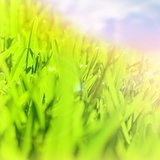 Abstract green grass border