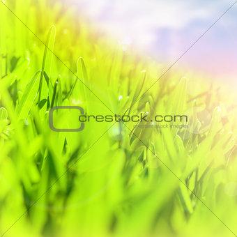 Abstract green grass border