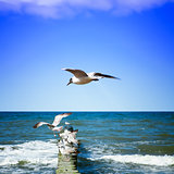 Seagulls on shore of the Sea