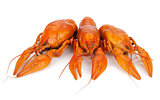 Three boiled crayfishes