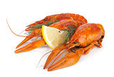 Boiled crayfishes with lemon slice and dill