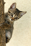 Climb cat