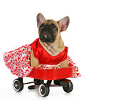 cute dog in a wagon