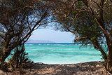 Nature tree frame to the sea