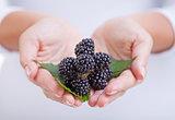 Fresh blackberries  in woman hands