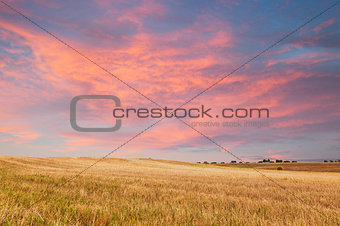 Beautiful sunset over field