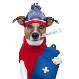 sick ill cold dog