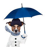 rain umbrella dog