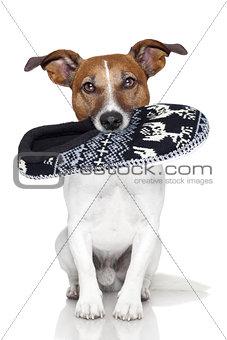 dog slipper mouth