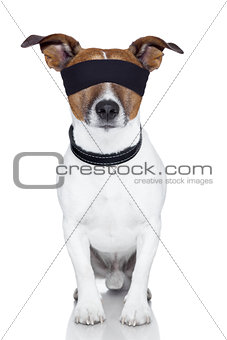 blindfold dog cover eyes
