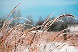 Frozen Vegetation