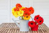 gerbera flowers bouquets