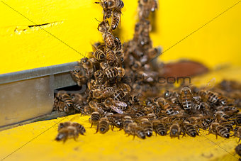 Entrance hive of bees