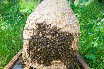 Swarm bee at basket