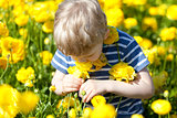 child at the blooming field