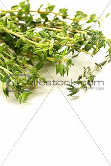 fragrant fresh green thyme on  white background
