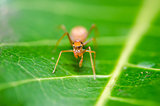 Spider on green leaf background