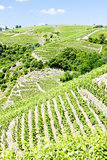 grand cru vineyards, Cote Rotie, Rhone-Alpes, France