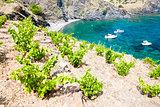 vineyard on Cap de Peyrefite near Cerbere, Languedoc-Roussillon,