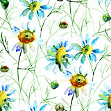 Seamless wallpaper with Camomile flowers