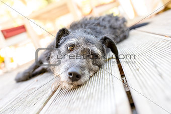Black dog lying on porch