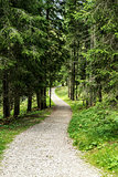path in the forest of Paneveggio