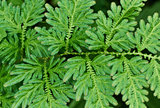 Fern leaves close up