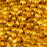 Seamlessly autumnal maple leafs pattern.