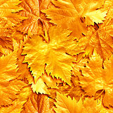 Seamlessly golden leafs background.