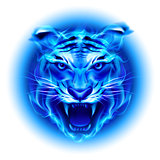 Head of blue fire tiger.