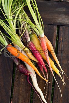 Fresh colorful carrots