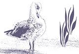 Bird Preening Feathers