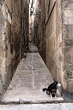 Streets in Cortona with small dog, Tuscany in Italy