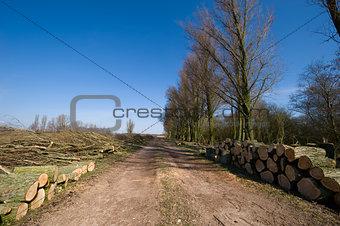 Forestry logging