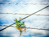 Plant on solar panel