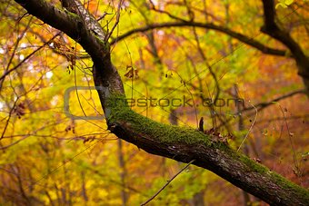Autumn Tree Forest