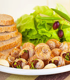 Escargot with green salad