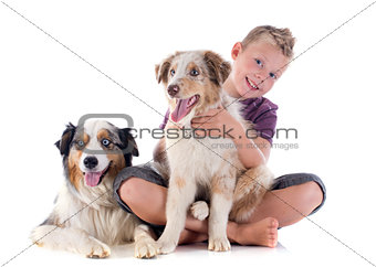australian shepherds and boy