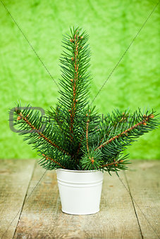 bucket with christmas fir tree