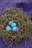 nest of blue eggs