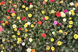 many bright flowers