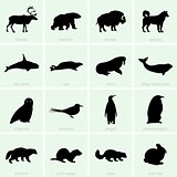 Polar animal icons